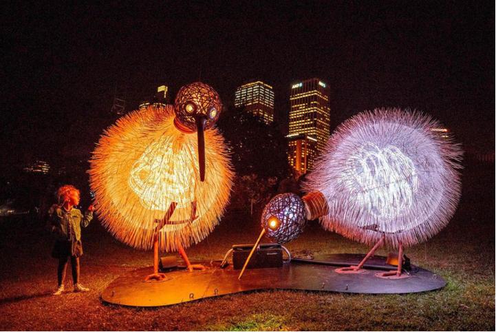 Light festival in Downtown Tauranga